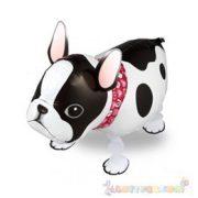 Sétáló francia bulldog fólia lufi - 50 cm